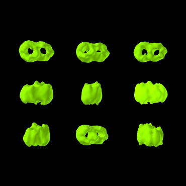 EM-Struktur der mitochondrialen Proteintranslokase TOM