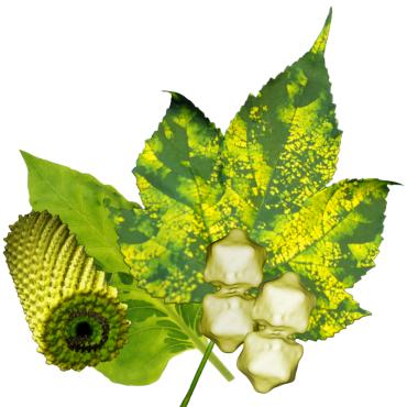 Symbolbild: Virenbefallenes Pflanzenblatt