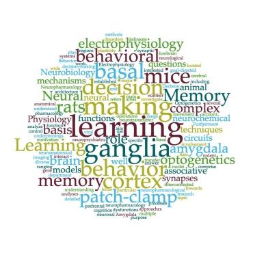 Symbolbild: Wortwolke mit Begriffen aus der Neurobiologie